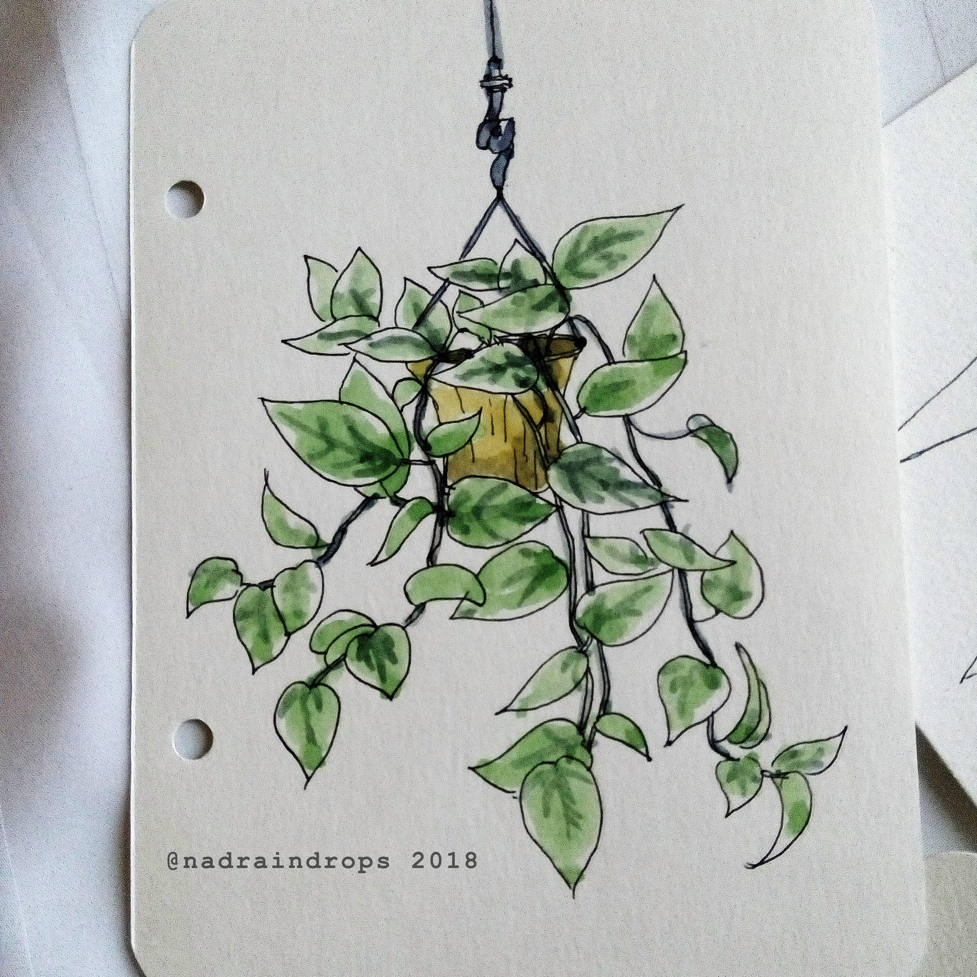 nadiya rahmah golden pothos 2018