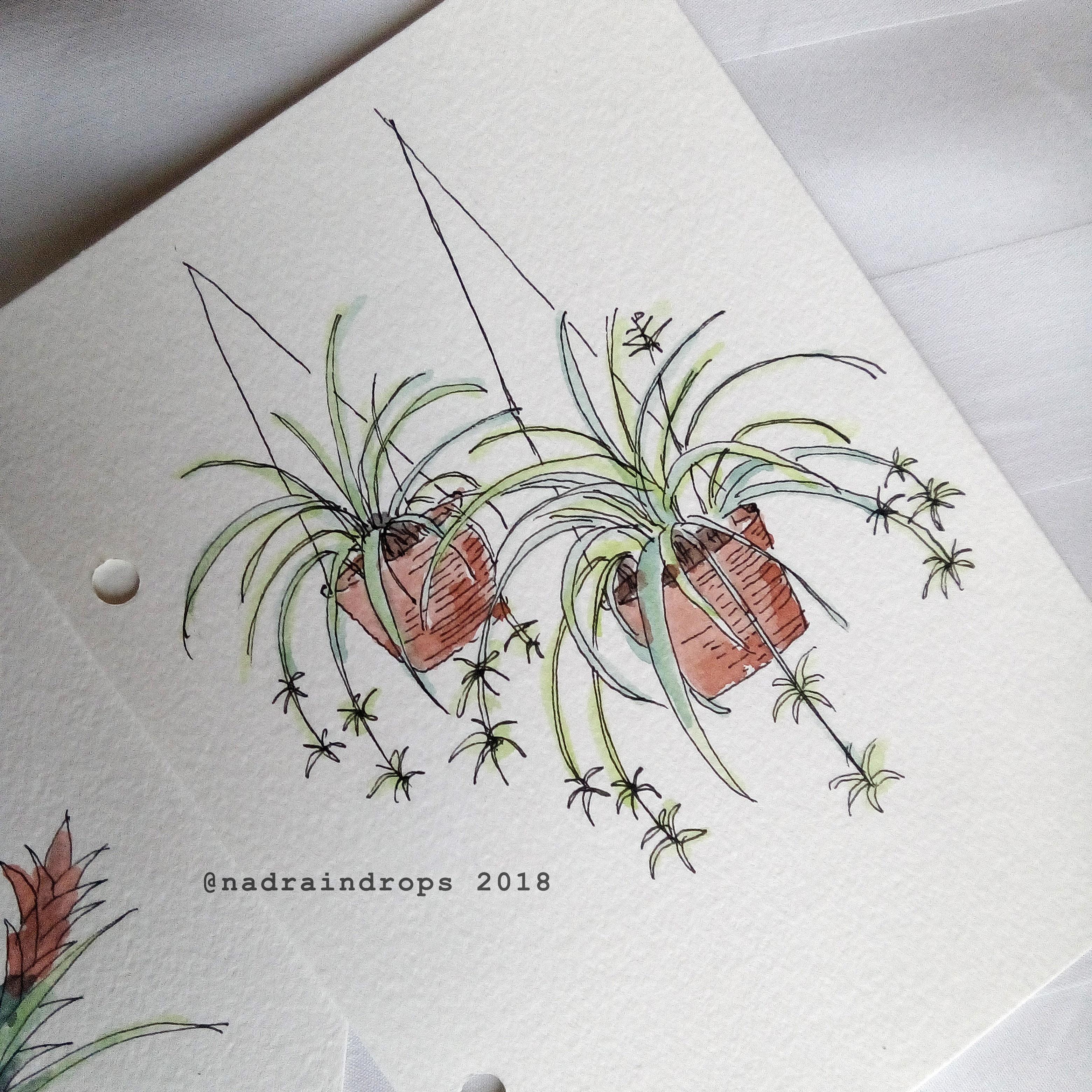 nadiya rahmah spider plants 2018